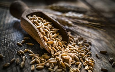 Healthy food: wholegrain wheat in a serving scoop shot on rustic wooden table