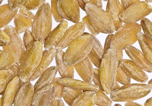 Einkorn wheat kernels close-up