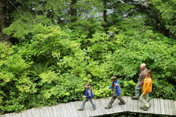 Family Walking on Forest Boardwalk