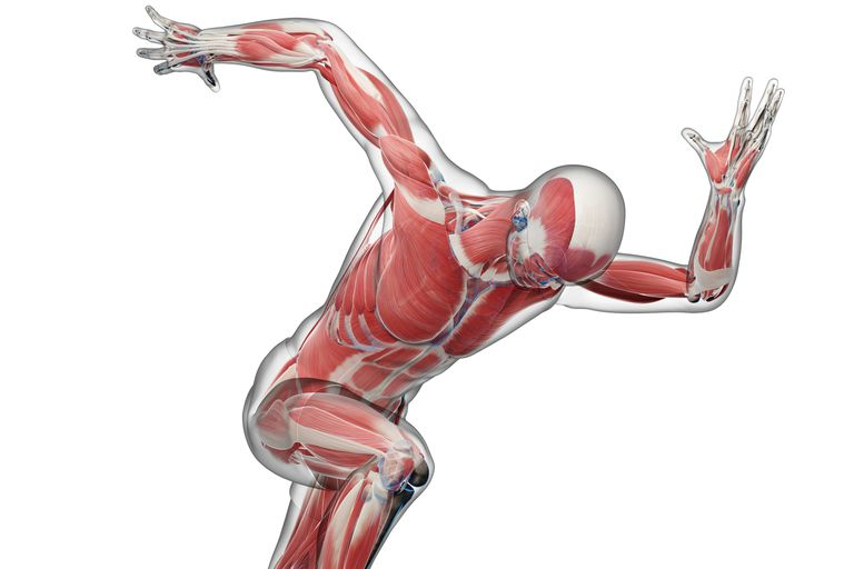 Biomechanics And Body Movement