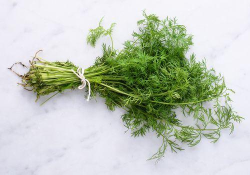 Dill crop