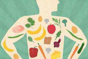 illustration of food in body