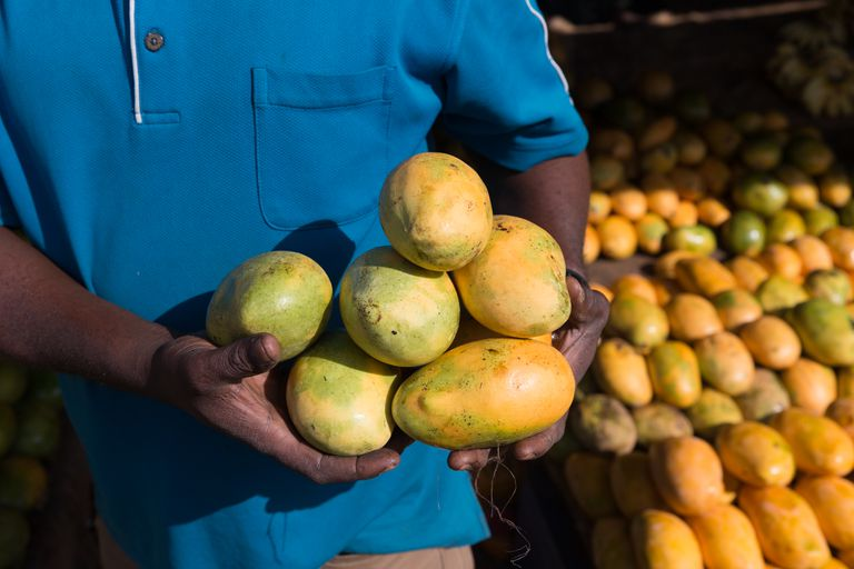 Mango vendor holding mangoes
