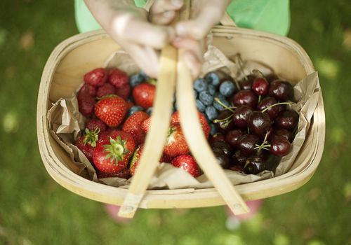 Hands holding a basket of assorted berries