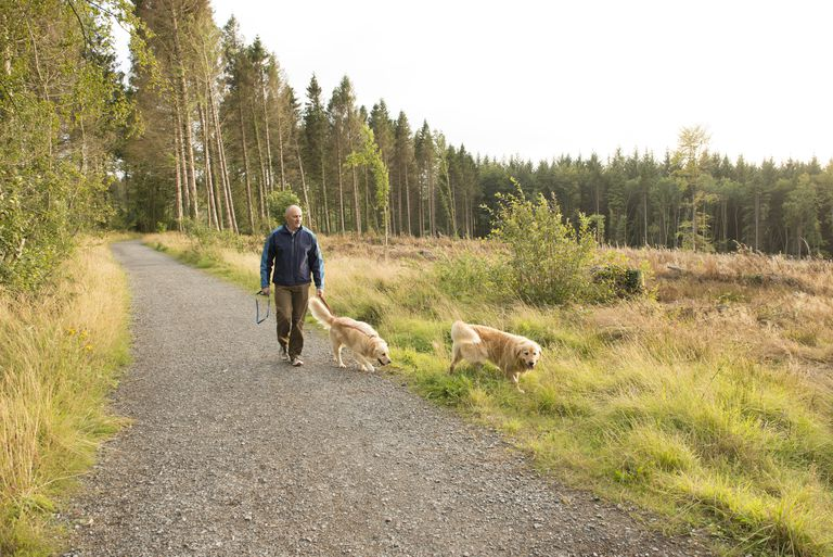 man walking in the woods with dogs