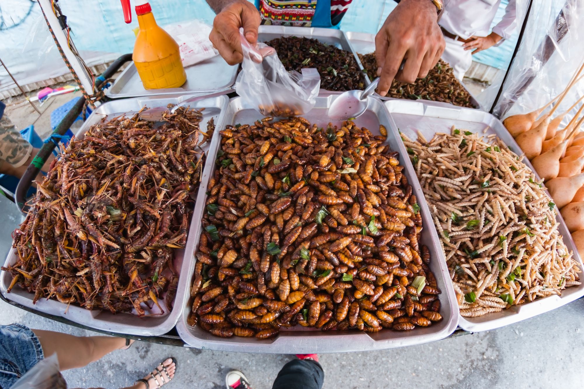 6 Types Of Insects You Can Eat