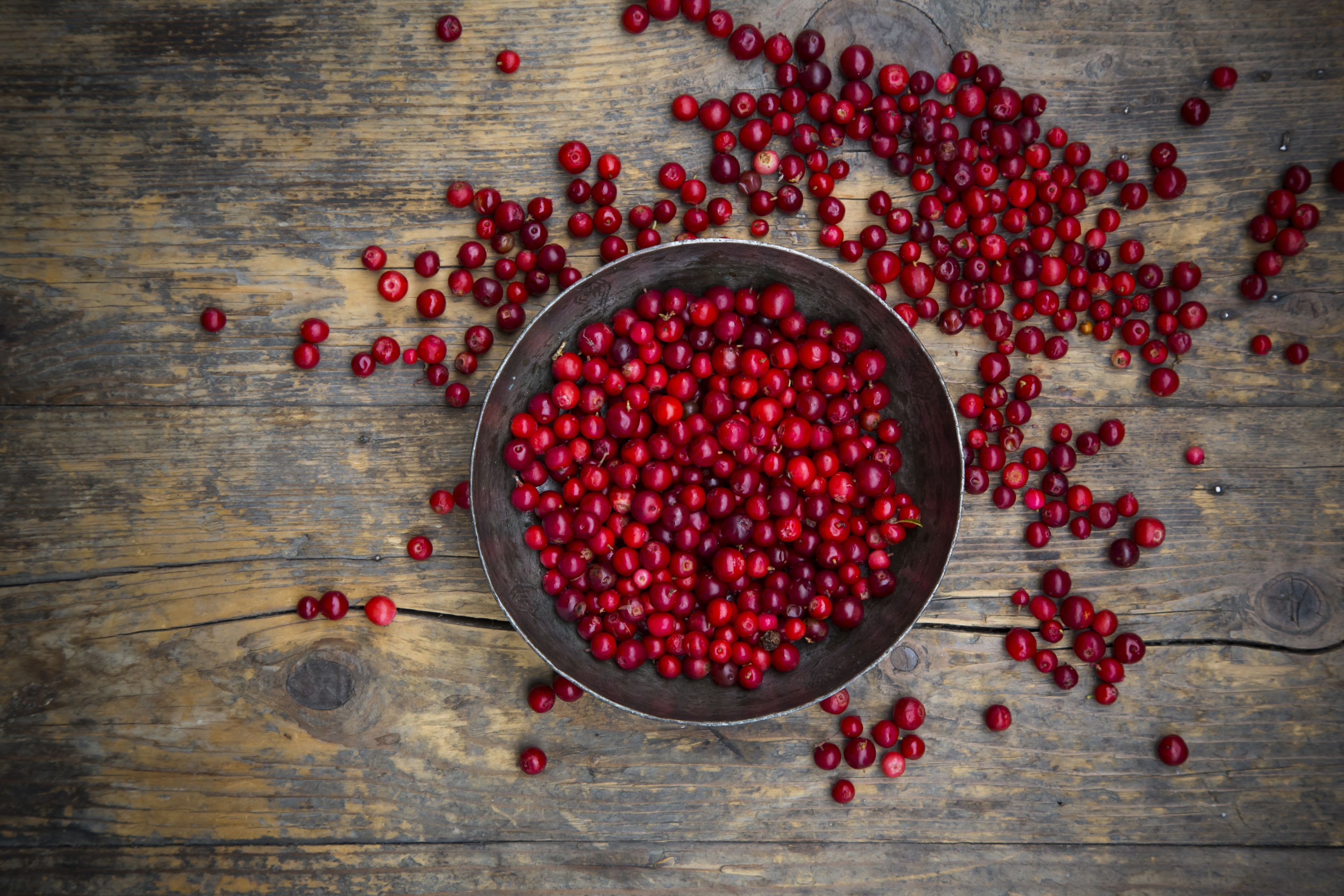 Lingonberries are good for you.