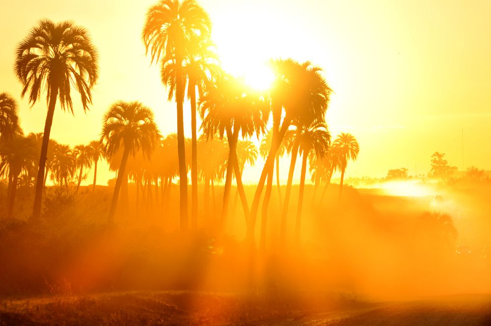 palm trees in the hot sun