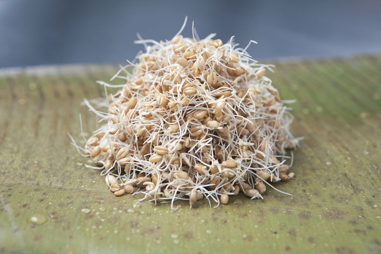 Close up of pile of sprouts