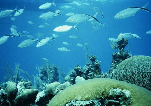 School of fish near brain coral.