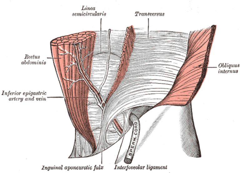 Your Core Strength And The Transverse Abdominis Muscle
