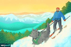 Man and dog skijoring