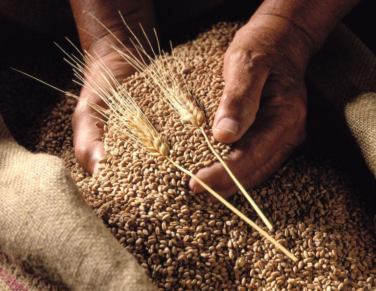 organic wheat in a sack