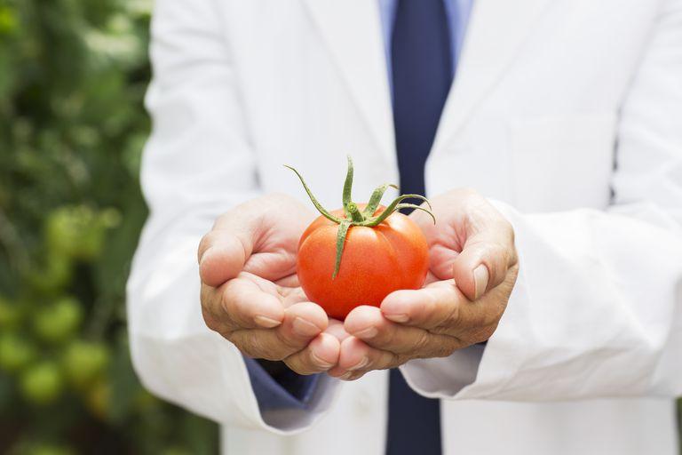 Botanist holding ripe tomato