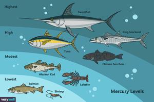 Mercury in types of fish
