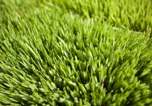 La hierba de cebada