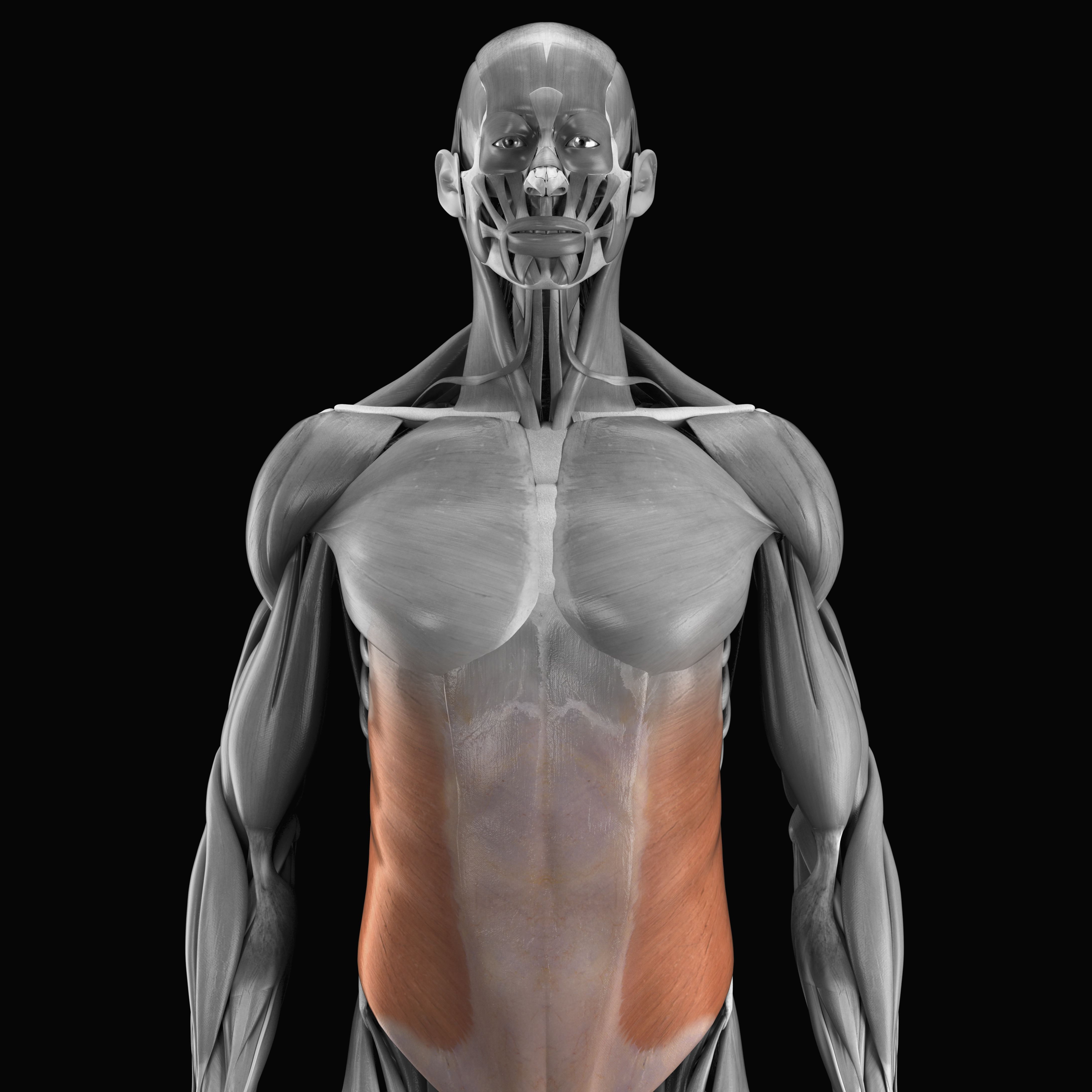 Músculos oblicuos externos e internos