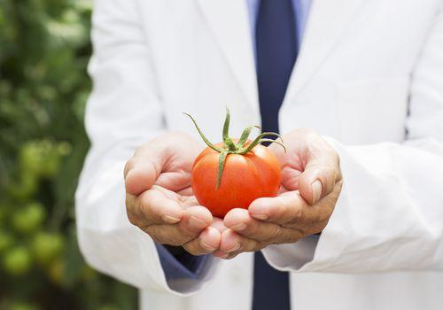 Botánico con tomate maduro