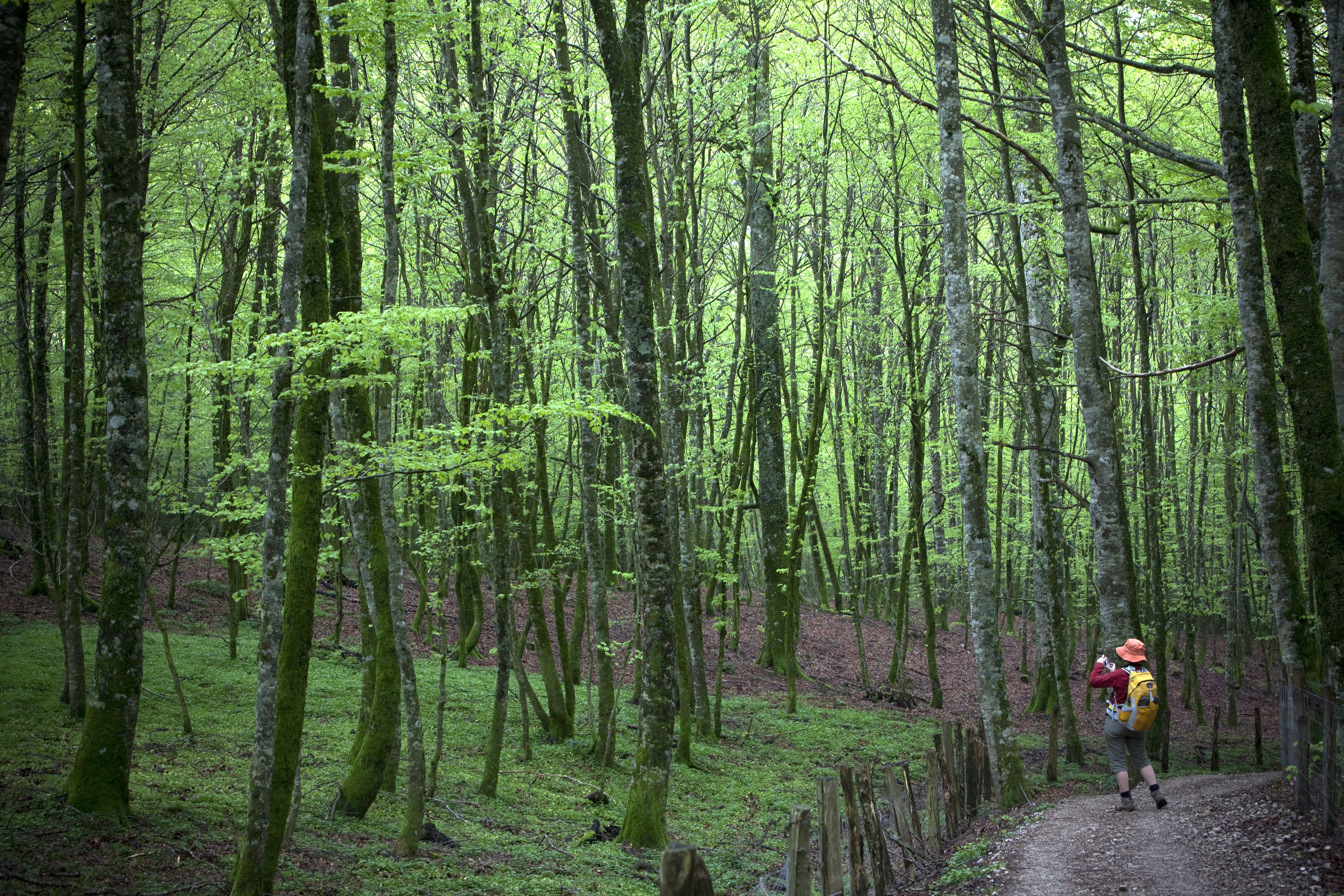 Forests on the Camino de Santiago, Spain