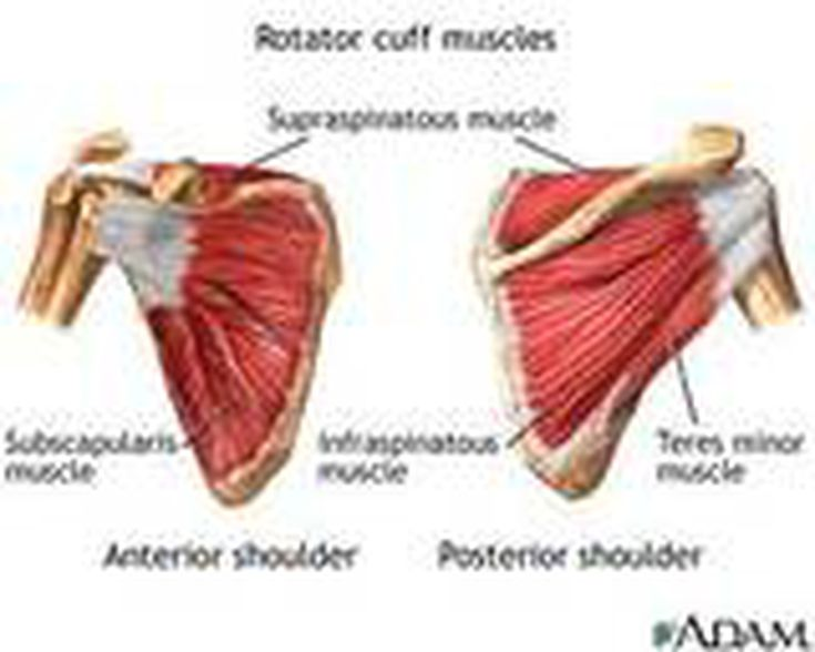 Injured Rotator Cuff Of The Shoulder
