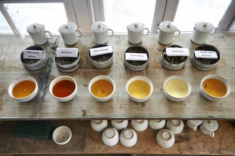 rows of loose leaf tea and brewed tea in cups