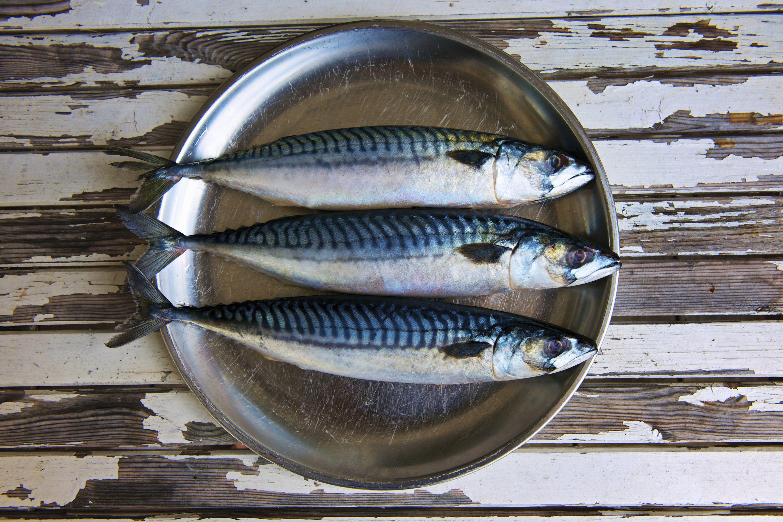 Top 8 Fish For Omega 3 Fatty Acids