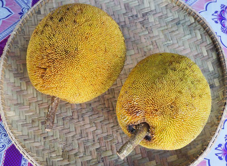 two jackfruit on a wicker platter