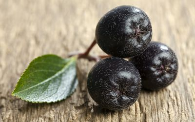 The Benefits Of Maqui Berry