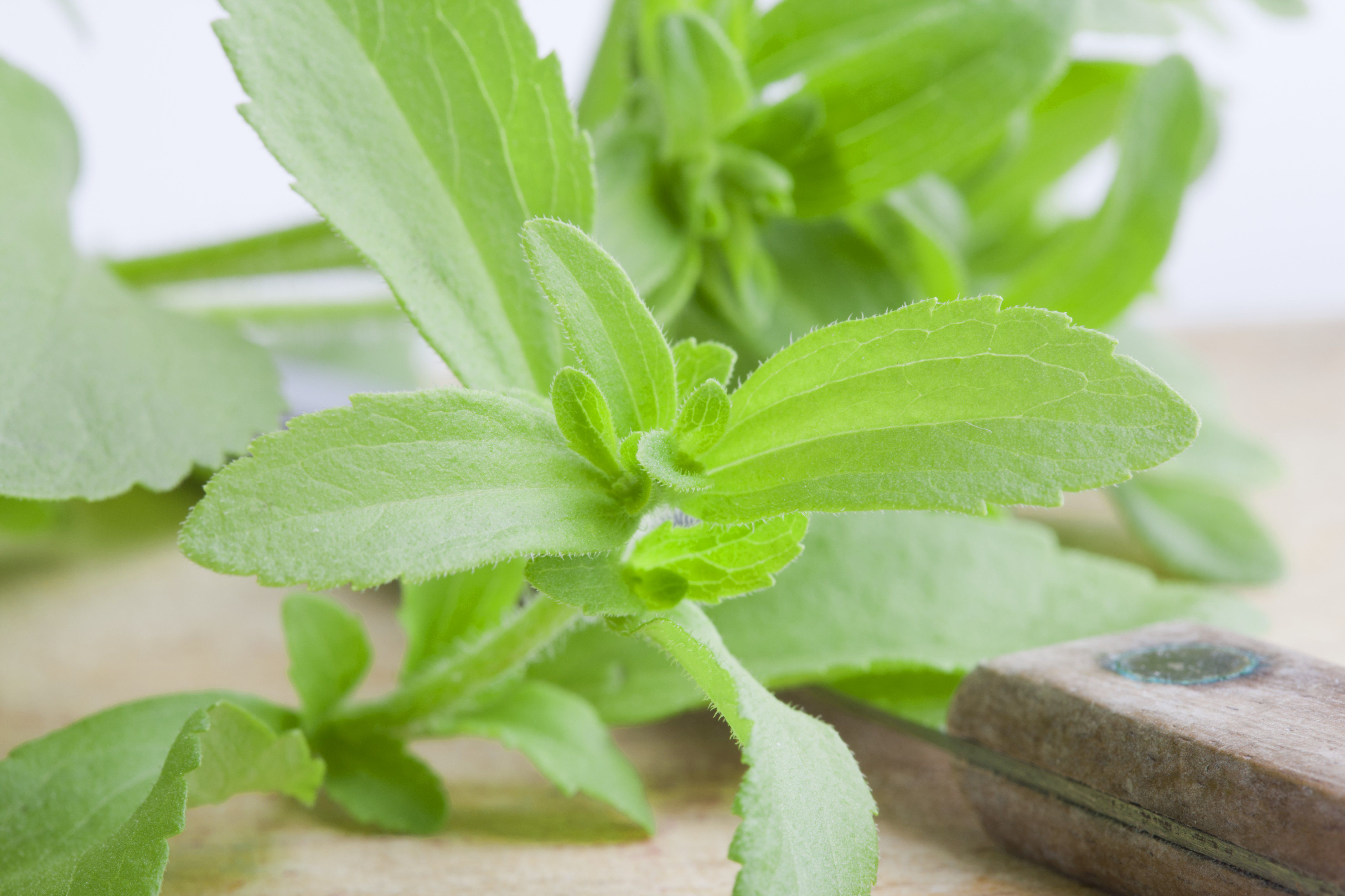 Is Stevia Sweetener Better Than Sugar