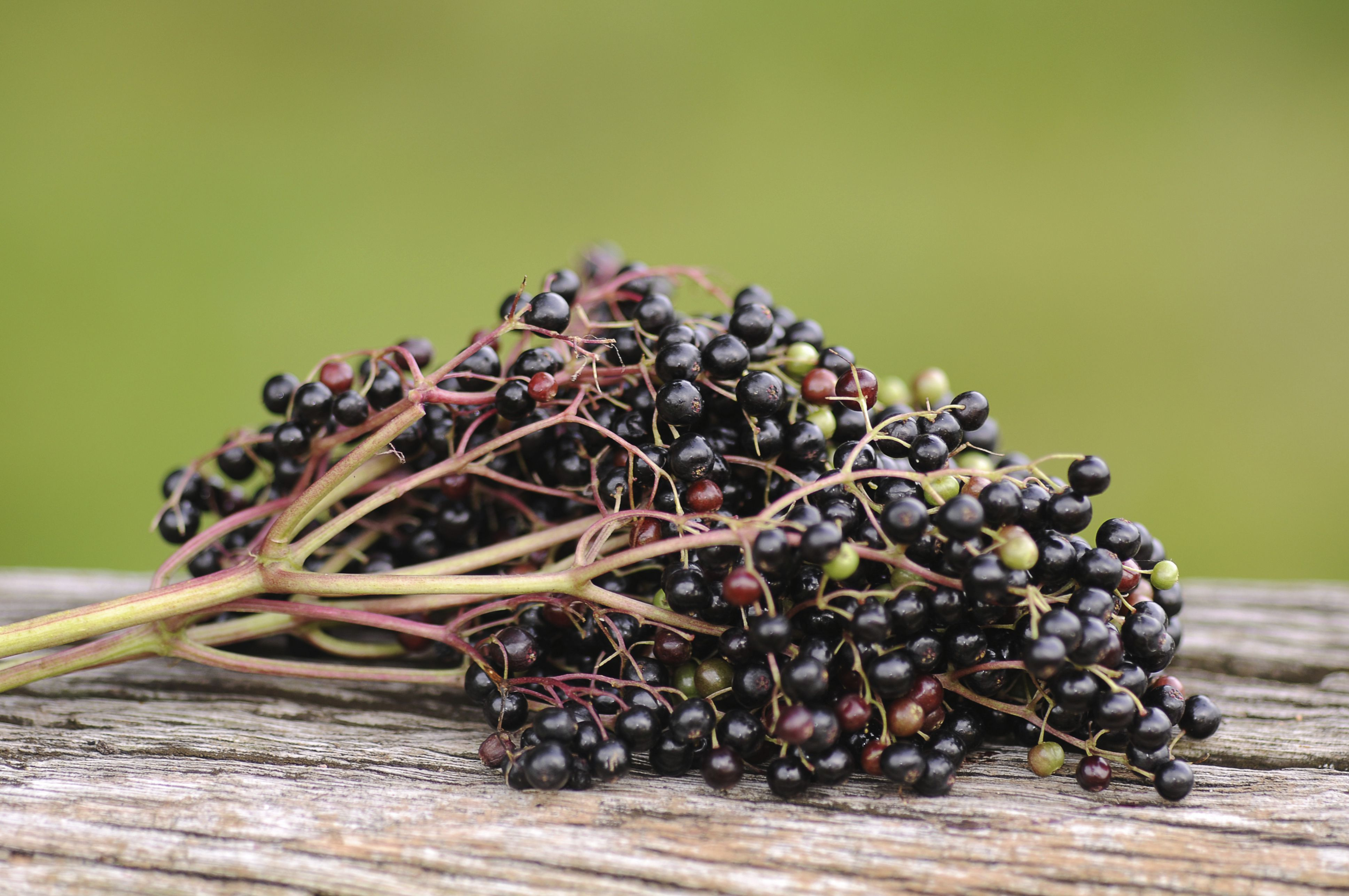 Elderberries are good for you.