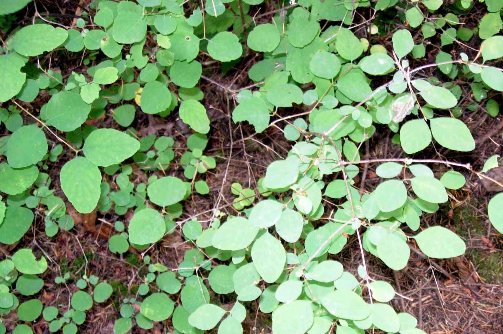 How Do You Know If That Plant Is Poison Oak