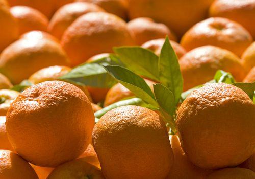 Naranjas de Sevilla, también conocidas como naranja amarga