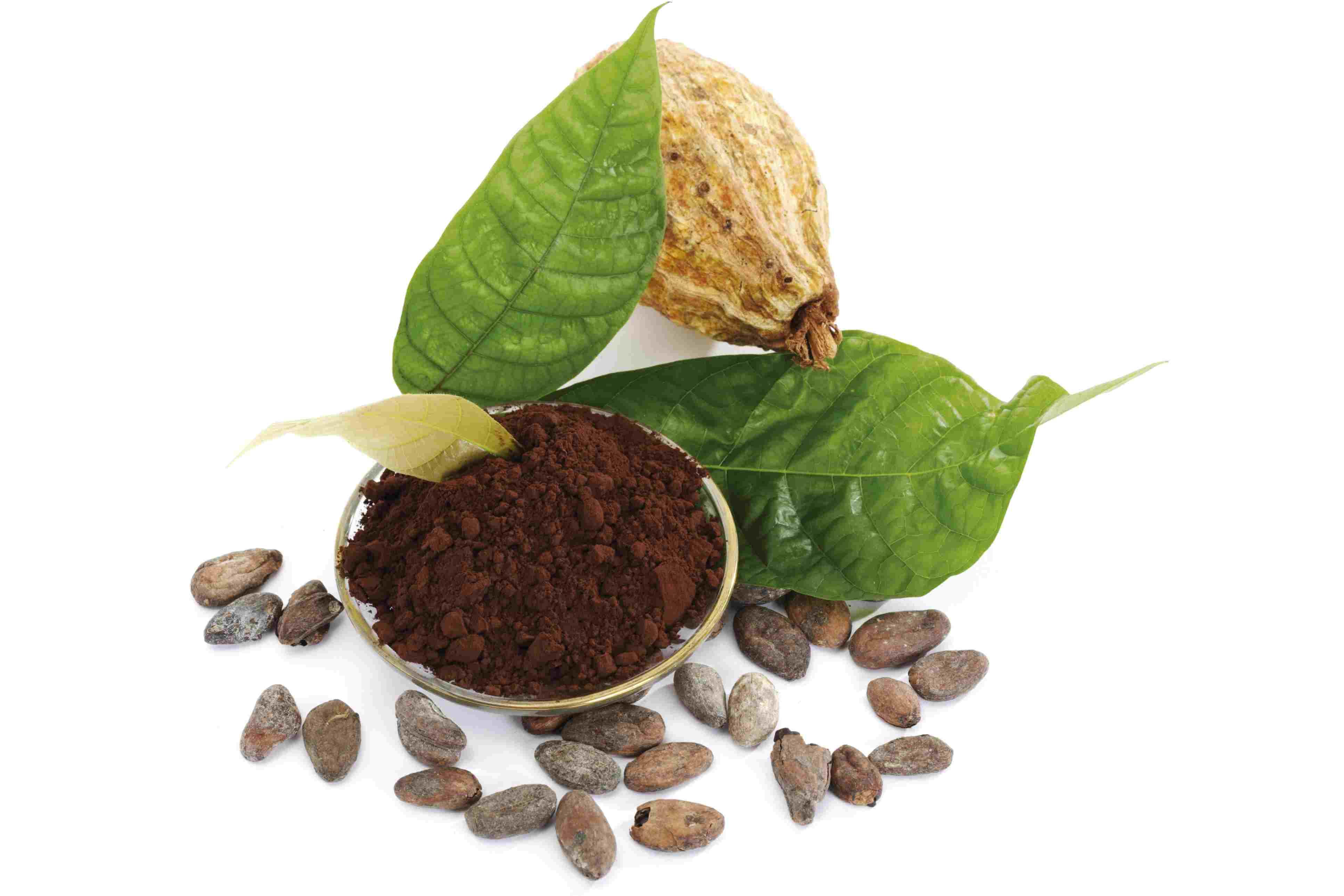 Theobromine in Cocoa Beans