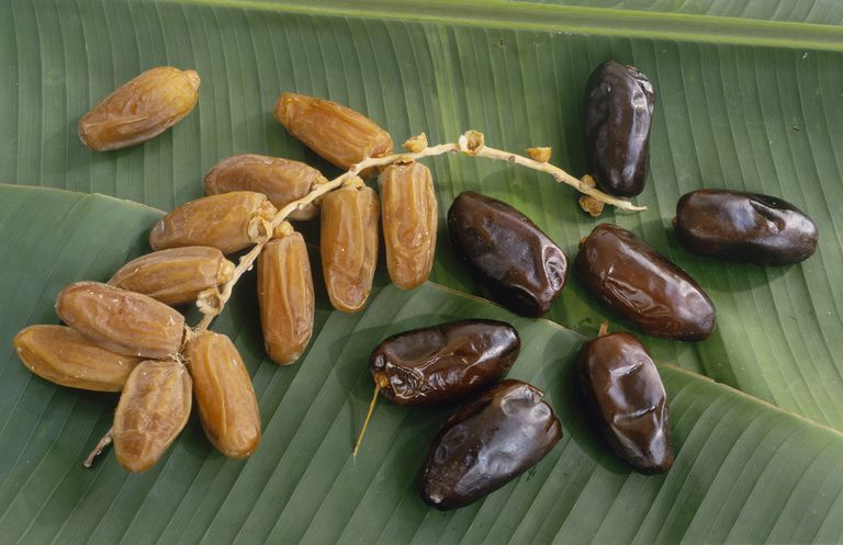 Fresh & dried dates on green leaf